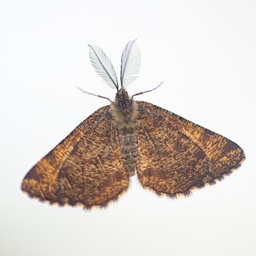 Lähikuva perhosesta