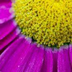 Kukan terälehdet