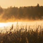 Aamu-usva järvellä