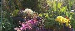 Kuva puutarhasta