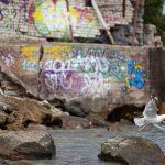 Graffitit ja lokki